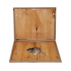 Capcană adezivă gata de utilizare din lemn pentru combatere eficientă șobolani șoareci